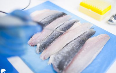 ULTRAFISH, A COMMITMENT TO SUSTAINABILITY