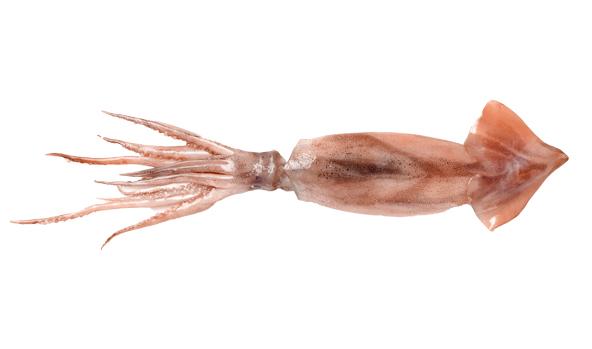 calamar-azores-scanfisk