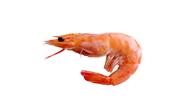 camaron-scanfisk