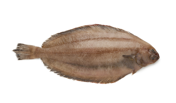 gallo-scanfisk