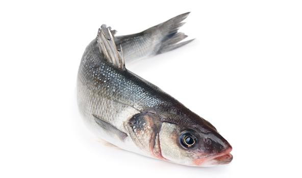lubina-scanfisk