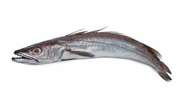 merluza-del-cabo-scanfisk